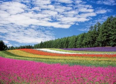 北海道の花畑