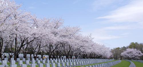 戸田記念墓地公園のお墓