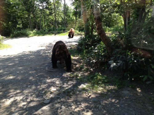 バスを追ってくる熊