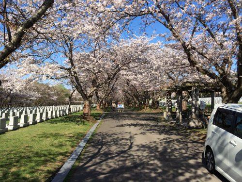 戸田記念墓地公園並木道2
