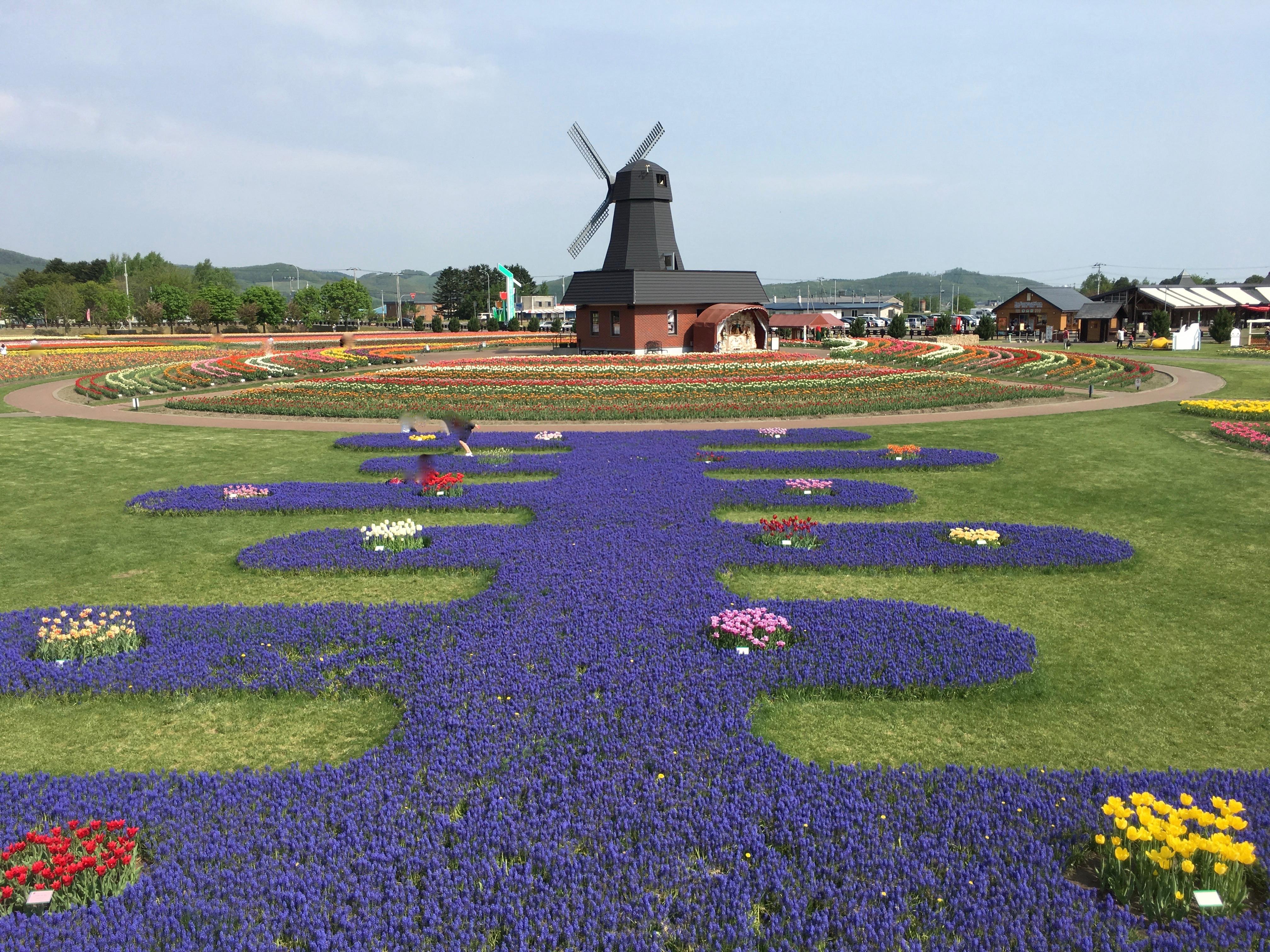 チューリップ公園のチューリップ以外の花