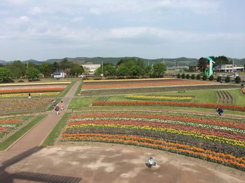展望台から見たチューリップ公園2