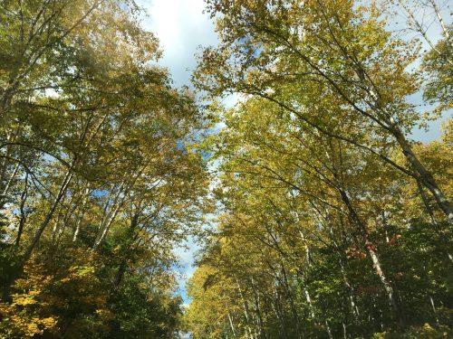 北海道の紅葉