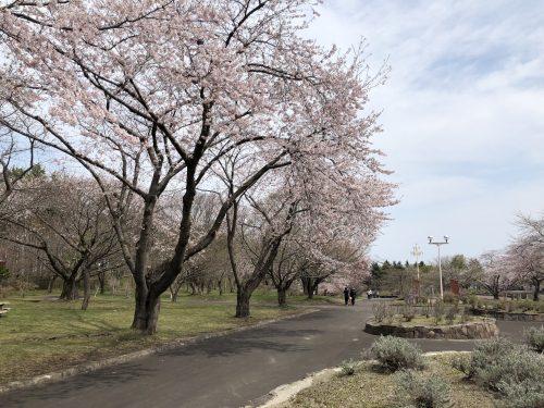 道の駅YOU・遊・もりの桜