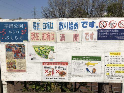 平岡公園梅の開花状況