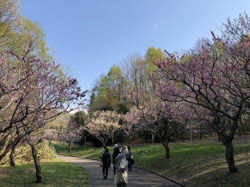 平岡公園の梅並木