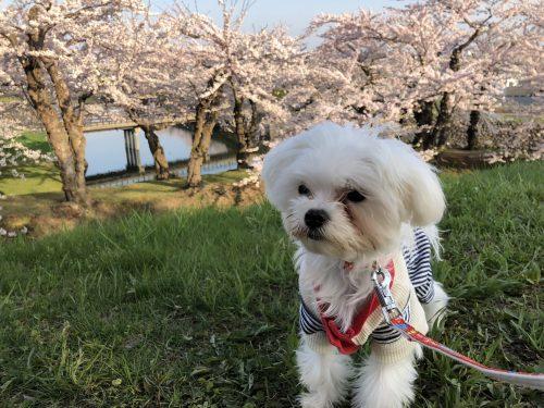 愛犬と五稜郭公園