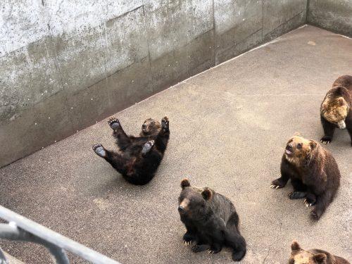 ひっくり返る熊